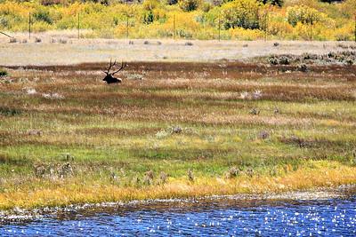 Lone buck in Beaver Meadows