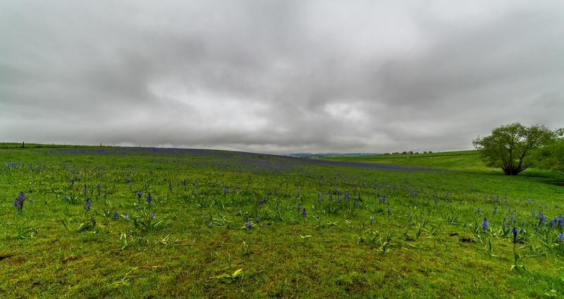 Wildflower Pasture