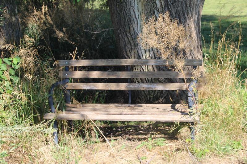 "Rebecca's ""Sunset Bench""."
