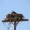 Active Osprey nest.