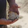 A pretty good sized chunk of bone fossil.