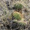 Cactus.  Best to avoid.  :-)