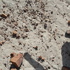 Among the rocks here are visible fragments of dinosaur bone fossils.