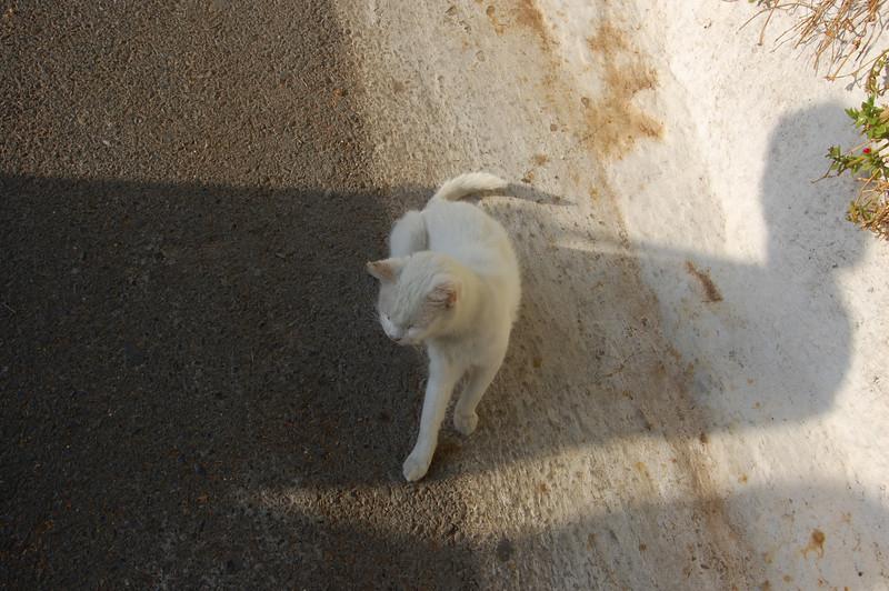 Cat along the roadway by the Paleokastritsa Monastery.