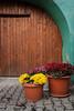 fall colors, Sighisoara