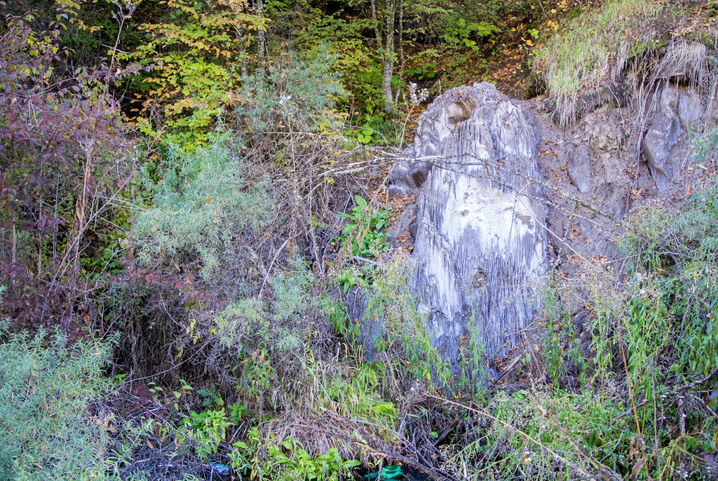 Piece of salt popping out in the woods - Sovata
