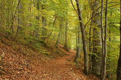 Brasov Woods