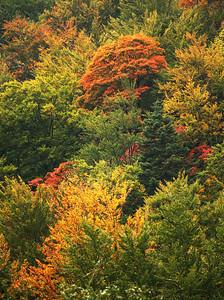 Autumn colors, Buchegi mountains