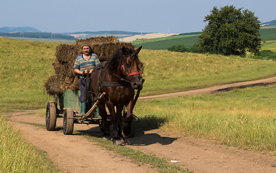 moving hay to the barn