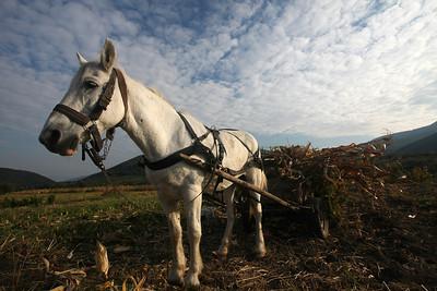 Harvest, Sibiel