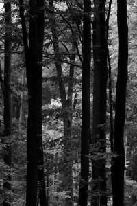 Forest in the Buchegi mountains