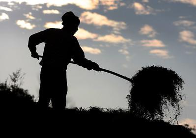 Harvest Time, Sibiel