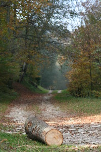 Karpat Wood