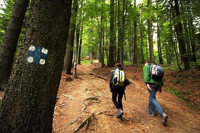 Hiking in the Buchegi Mountains, near Predeal