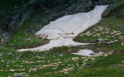 we visit with a shepard and his 900 sheep on top of the mountain pass
