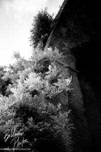 Climbing Trees bw