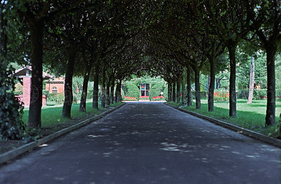 The Loyola University of Chicago Rome Center campus/1970:  The brick entrance road that was culled by an intricate canopy of well-pruned trees.