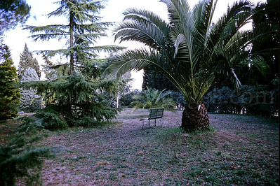 The Loyola University of Chicago Rome Center campus/1970: Palm trees and pine trees made for a pleasant place to sit and contemplate.