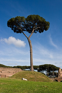 A tree near the Palatine ruins