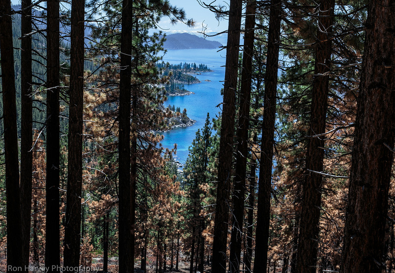 Lake Tahoe -Flum