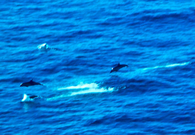 dolphins along our ship