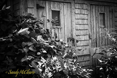 Overgrown outhouse. Ross Farm Museum, Nova Scotia.