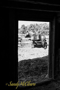 Horse seen through the doorway of a barn. Ross Farm Museum, Nova Scotia.