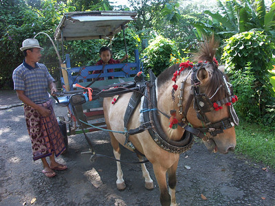 We rode horse carts to visit a local market