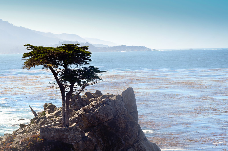 The Lone Cypress at Pebble Beach.