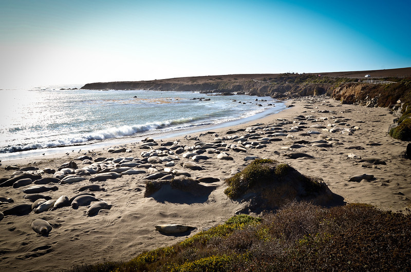 The elephant seals at the end of our drive.