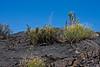Vegetation Conquering Lava-Sunflower, New Mexico