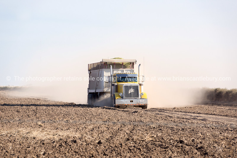 Grain truck crossing cropped field with trail of dust.