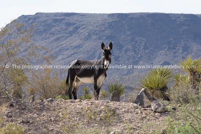 Mojave desert scenery on Route 66, Arizona, USA