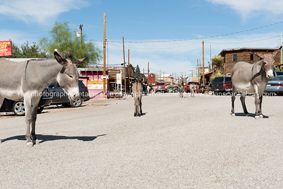 Oatman, historic mining town on Route 66, Arizona, USA