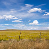 Fields of bright yellow rabbit brush, New Mexico, USA.-14