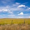 Fields of bright yellow rabbit brush, New Mexico, USA.-14