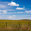 Fields of bright yellow rabbit brush, New Mexico, USA.-18