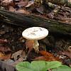 Pretty white mushroom by the swamp.