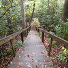 First set of steps heading down to Flatwoods Falls