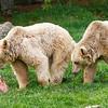 Im Waldviertel bekommen auch Bären Karpfen