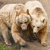Zwei Bären im Bärenwald von Arbesbach