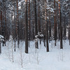 <p>Forest. Siberia, Russia.The temperature is  -36 C. December 2010.</p>