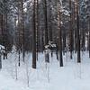 <p>Forest. Siberia, Russia.The temperature is  -36 C. December 2010.</p>