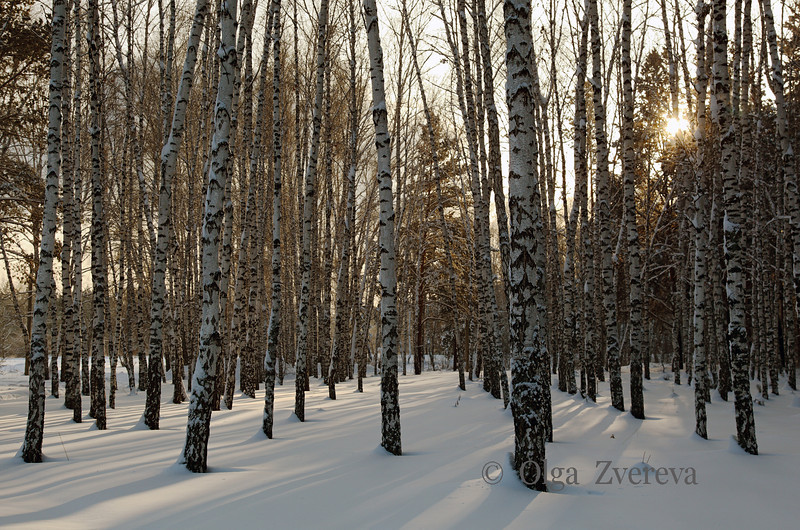 <p>Evening Light. Berdsk, Siberia, Russia.</p>