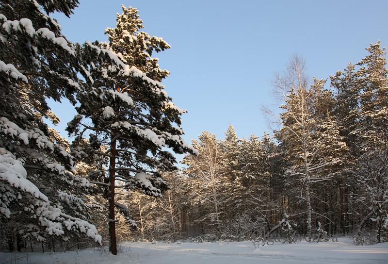 <p>Forest. Berdsk, Siberia, Russia.</p>