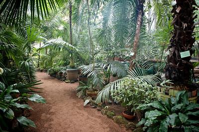 крытая оранжерея растений тропиков