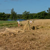 Harvesting hay in Khizy