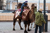 A double-humped camel in Irkutsk, Eastern Siberia.