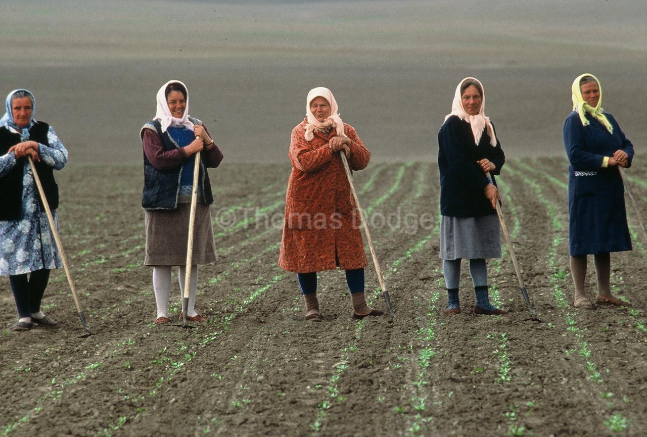 Field workers, Western Ukraine