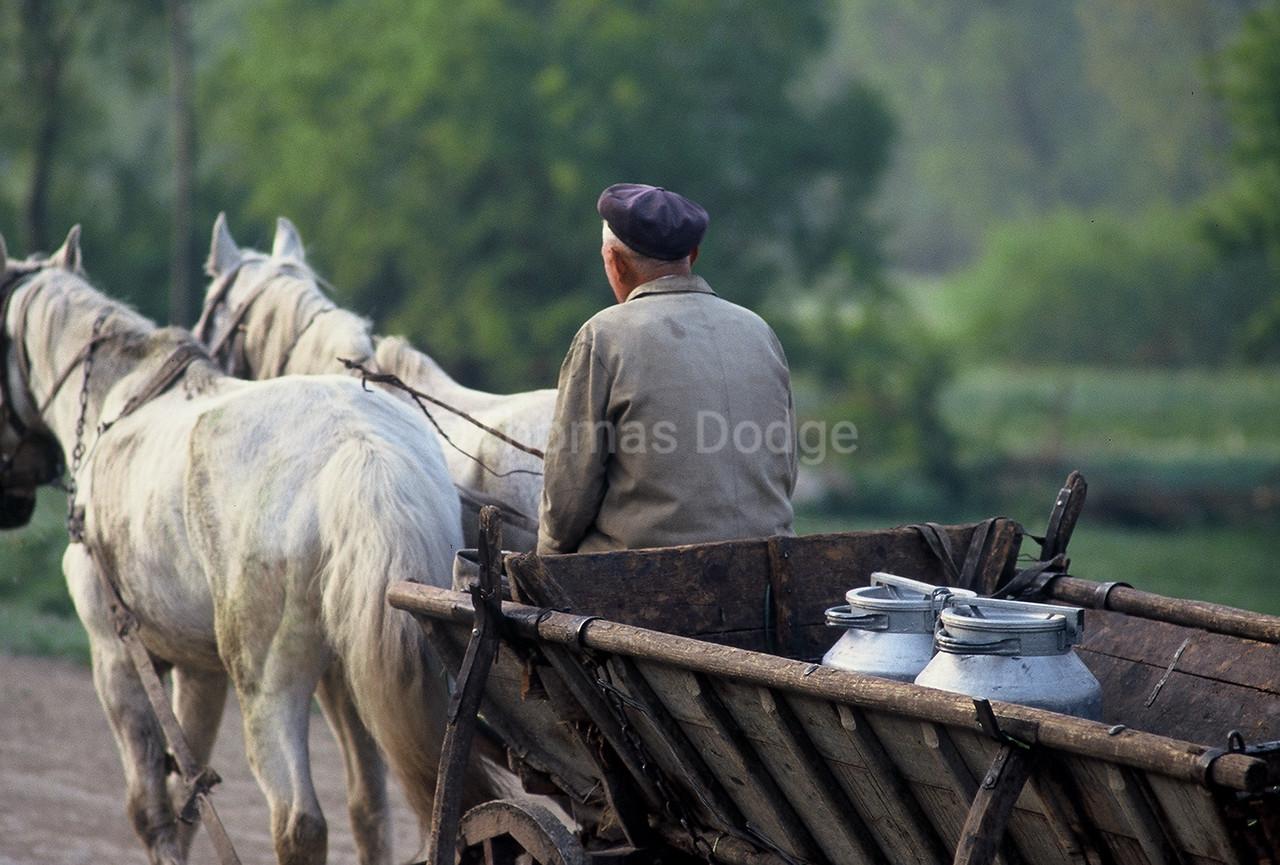 Milk delivery, Ukraine.